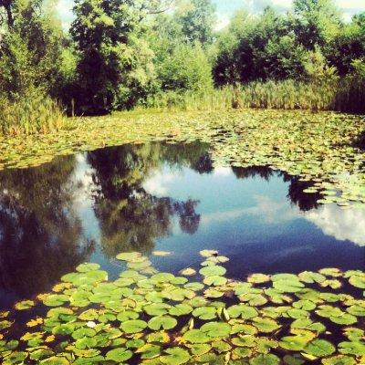 NYstate_mob_pond.jpg