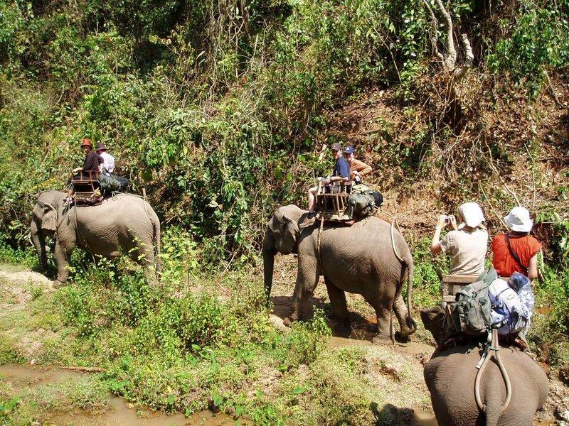 Elephants on parade, Chiang Mai