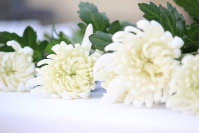 Peace flowers 1