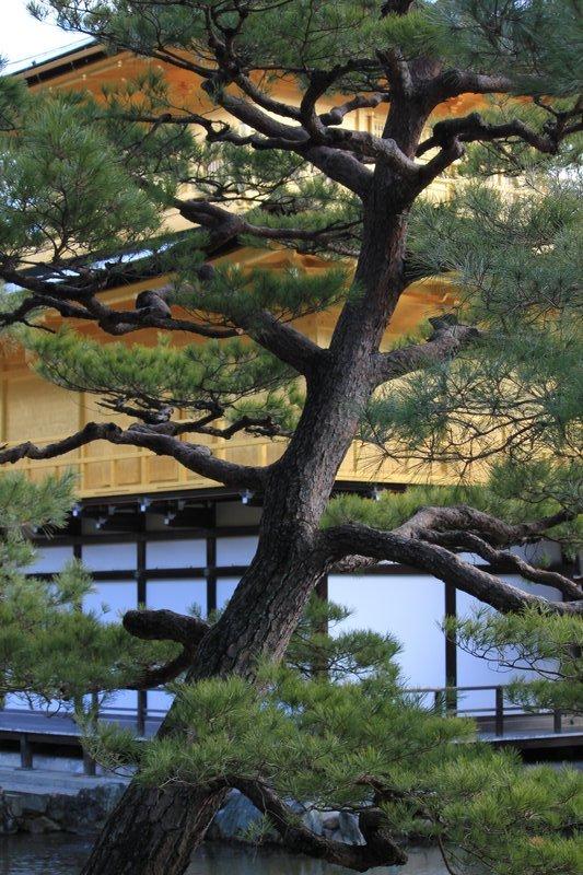 Golden Pavilion 2