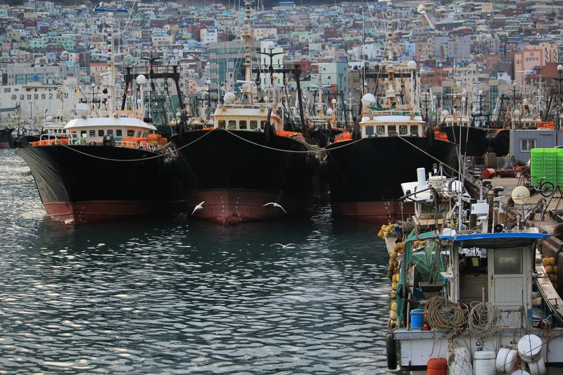 Fish Market Busan ships