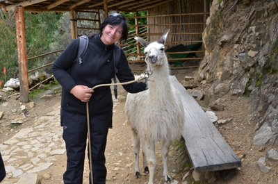 Isla del Sol - avec les lamas