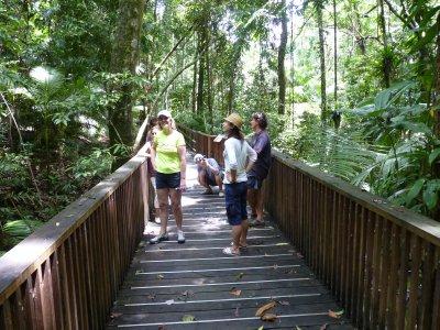 Civilized way of exploring the rainforest