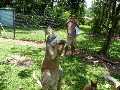 Smart Kangaroo