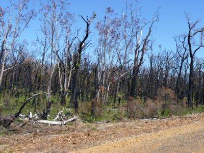 Recent bushfire
