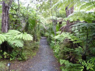 Trail at Waitakere