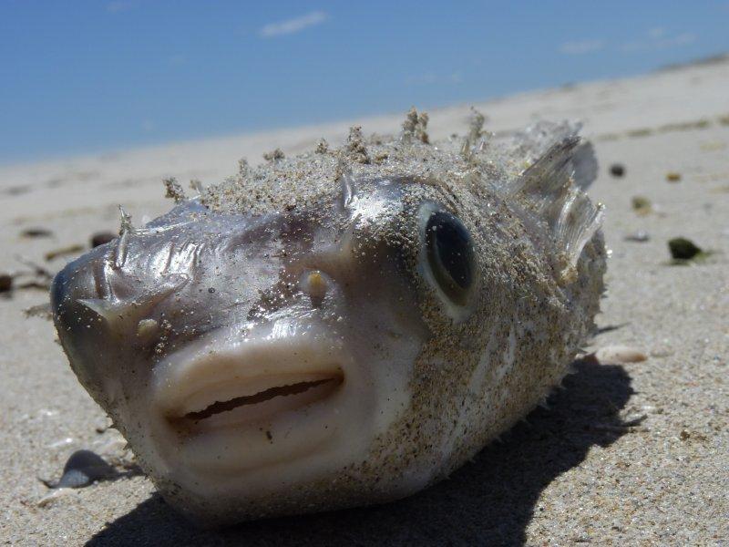 Funny fish at Ocean Beach in Denmark