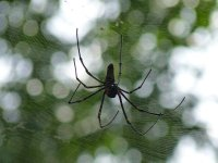 Spider in the rainforest