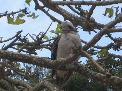 unknown_white_bird.jpg