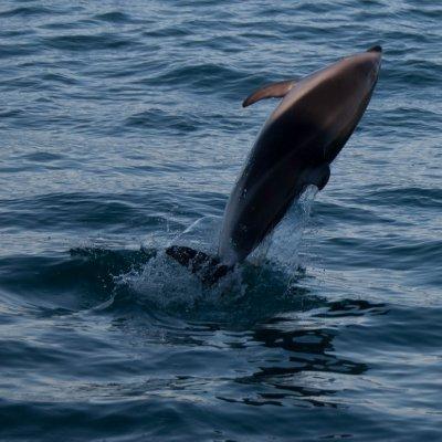 Dolphin Jump (2)
