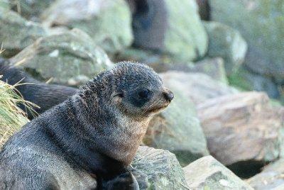 Seal Cubs