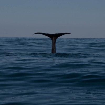 Sperm Whale Goodbye