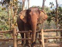 laos_elephant_2.jpg