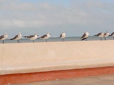 sea gulls all in a row