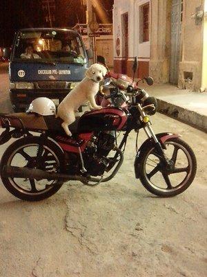dog days in Chicxulub
