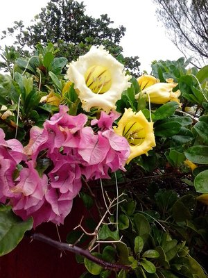 Chicxulub flowers