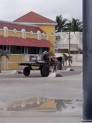 horse cart on the malecon