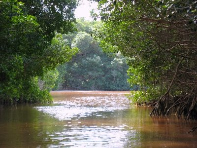 end of the mangrove tunnel