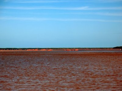 Red water makes for very pink flamingos