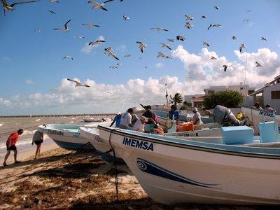 fishermen bringing in the catch in Chicxulub