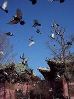 Buddhist Monastery, UB, Mongolia