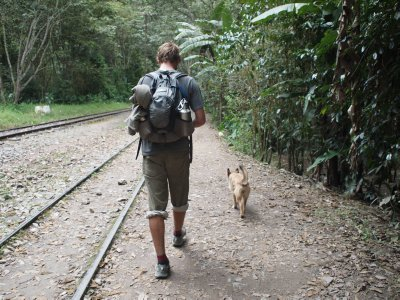 Dog Leads the Way to Machu Picchu