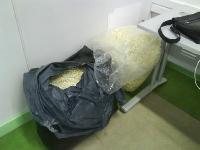 Popcorn of the ass sheep