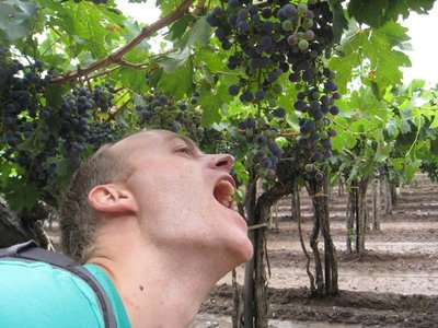 Chewing on vines