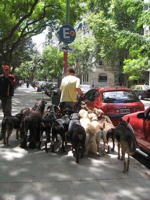 Dog walker in Palermo