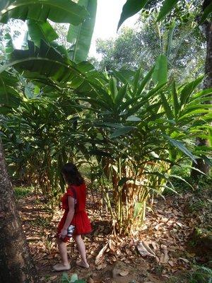 Cardamon plant
