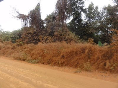 Green bushes at side of road covered with red dust