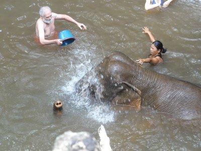 Don helping wash the elephants