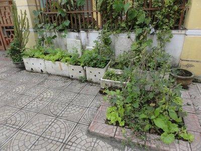 Everywhere we walk we see little street side gardens like this.