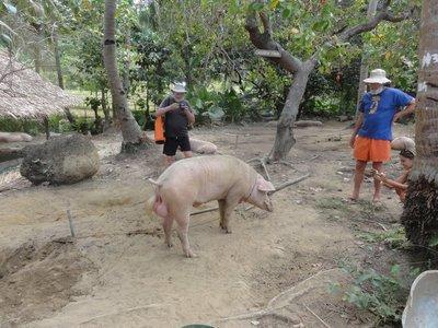 Part of the farm tour