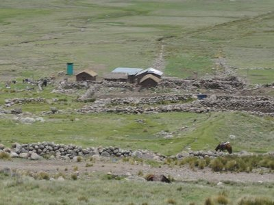 Stone Fencing on High Plateau