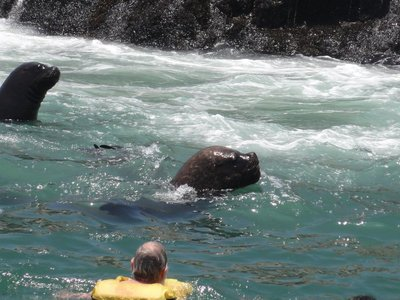 Don swimming with the Sea Lions