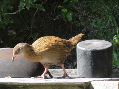 Weka on outdoor cooking bench