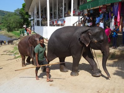 Mahout with elephant