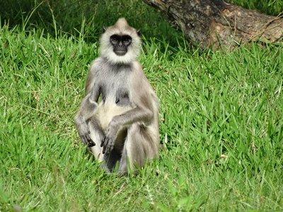 Monkeys, monkeys everywhere