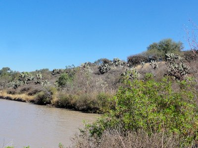 View of the cactus forest from the edge of the reservoir