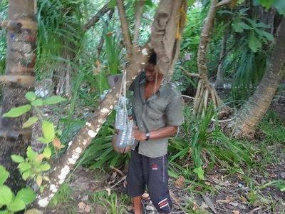 Man collecting sap