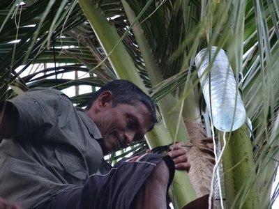Man at top of palm