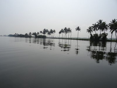 Line of palms on the dike