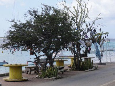 The most photographed trees on the island