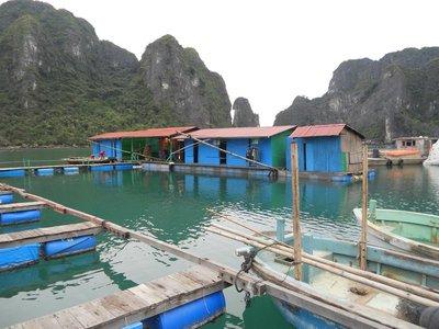 Pearl Village