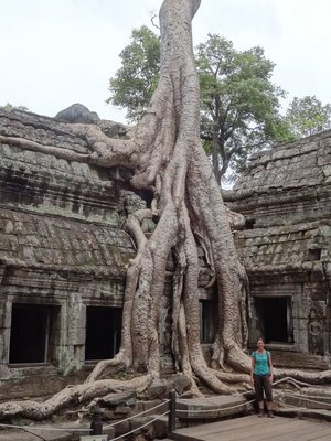 Another huge tree growing around a temple.