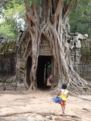 One of the huge trees growing in and around an ancient temple, with one of the many children selling souvenirs in the foreground.