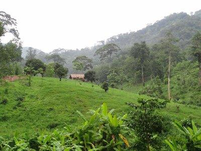 Lush Thailand countryside