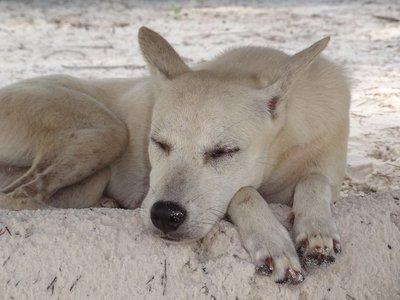 The dog that sat beneath my sun lounger on the beach.