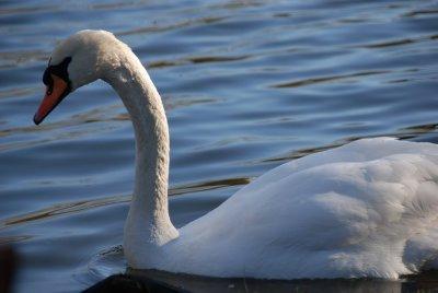 Lake__129_of_156_.jpg